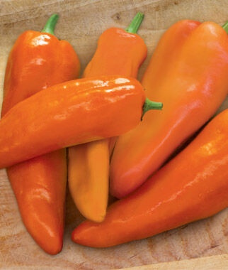 Pepper, Sweet, Good as Gold Hybrid, , large